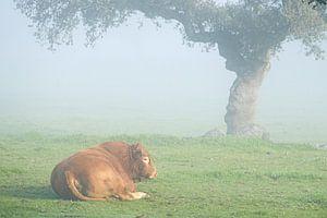 Relaxende stier van Joke Beers-Blom