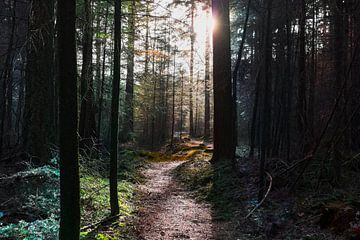 A path to something van
