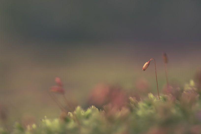 Klein Mos in een donker bos.  van Robert Wiggers