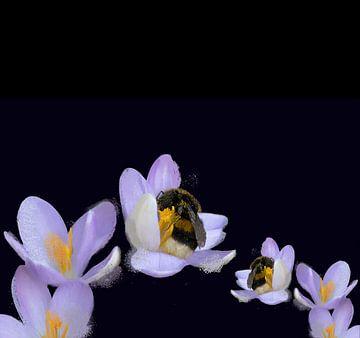 Sleeping bumblebee van Lynlabiephotography