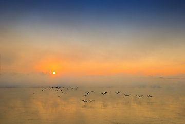 Fly away von Jeroen Harleman