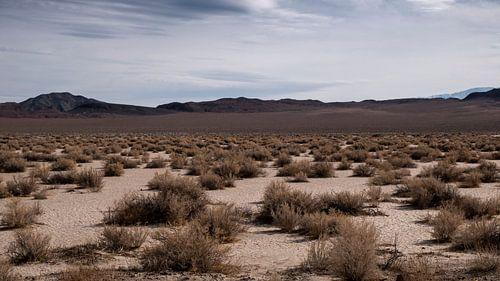 Californië woestijn