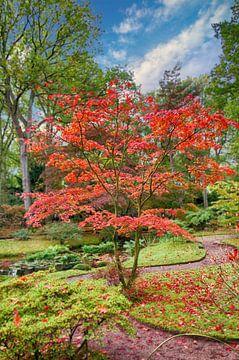 Herfstkleuren in een Japanse tuin van