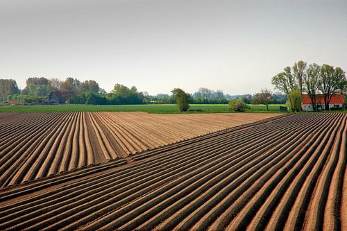 Lijnen in een asperge veld in Zeeland. van