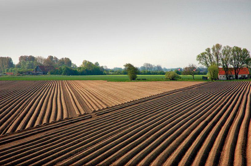 Lijnen in een asperge veld in Zeeland. van Edward Boer