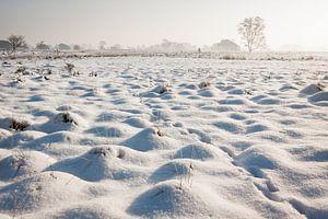 Sneeuwlandschap op de Strabrechtse Heide