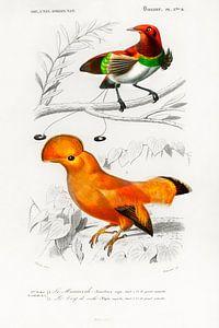 Different types of birds von Heinz Bucher