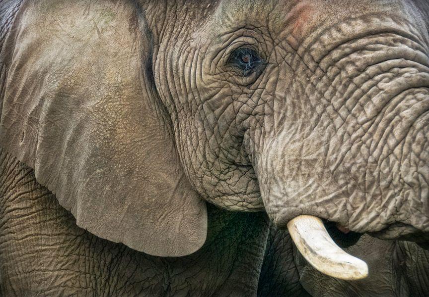 Olifanten kop van Marcel van Balken