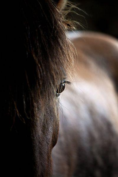 IJslands paard van Reggy de With