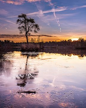 Sonnenaufgang Oisterwijk Wälder und Moore von Goos den Biesen