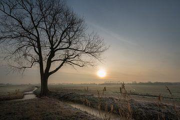 Baum in Landschaft von Moetwil en van Dijk - Fotografie