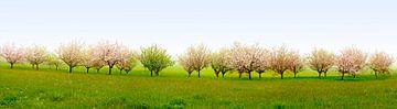Blühender Obstgarten von Leopold Brix
