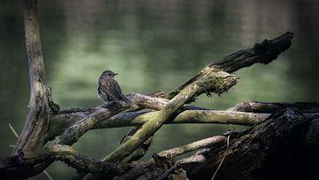 oiseau sur une branche d'arbre sur