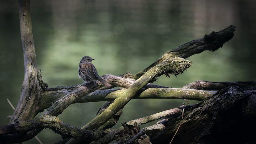 Vogel op tak van Margaretha Gerritsen