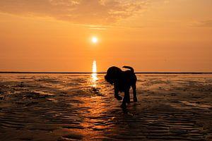 Chiot retriever du Labrador au coucher du soleil sur Annelies Cranendonk