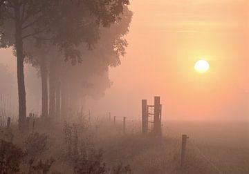 Zonsopkomst Sunrise van Judith  van Eden
