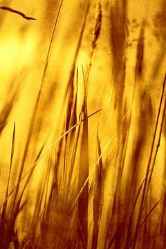 Gras von Markus Wegner