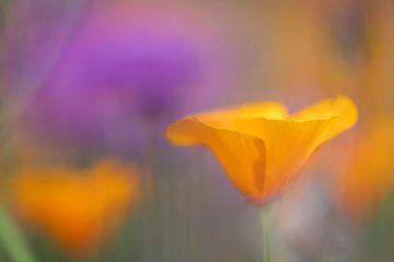Frühlingsblumen von Kaat Nobelen