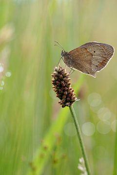 Vlinder op stengel van Astrid Brouwers