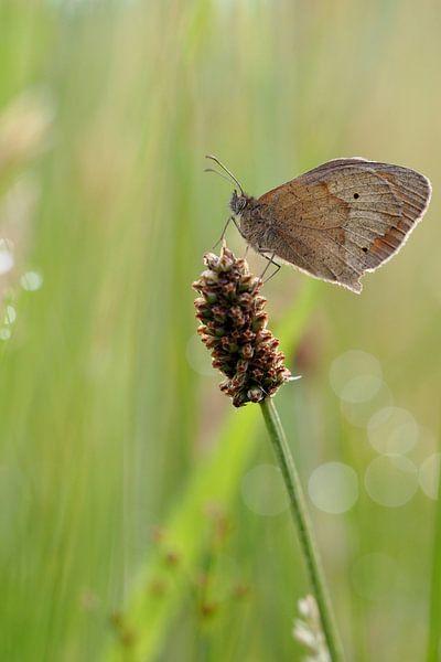 Vlinder op stengel von Astrid Brouwers