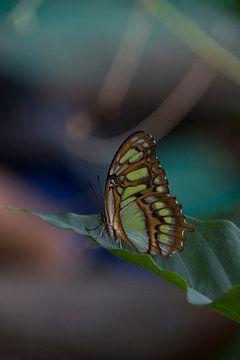 Vlinder rustend op een blad. van Tosca Dekker - Fleury