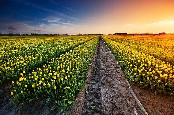 Fields of Gold van Martijn van der Nat