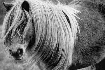 Pony van