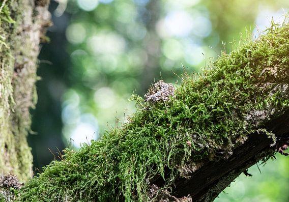 Harzwanderung mit Blick auf Moos bewachsenem Ast