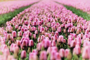 Tulpen von Marianne Bras
