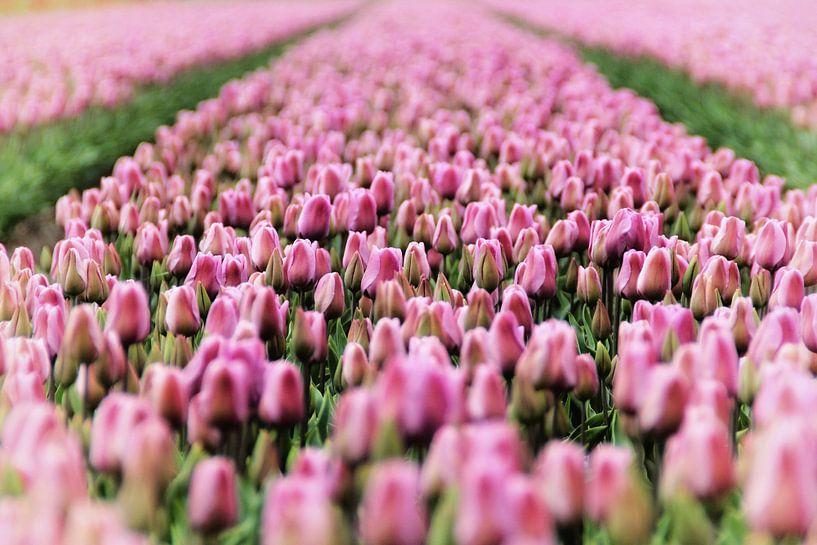 Tulpen van Marianne Bras