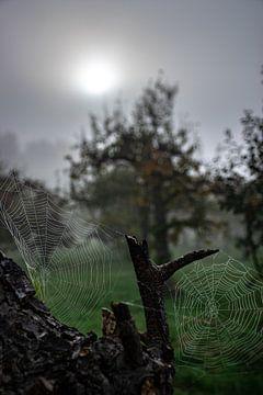 Spinnenwebben van Ingrid de Vos - Boom