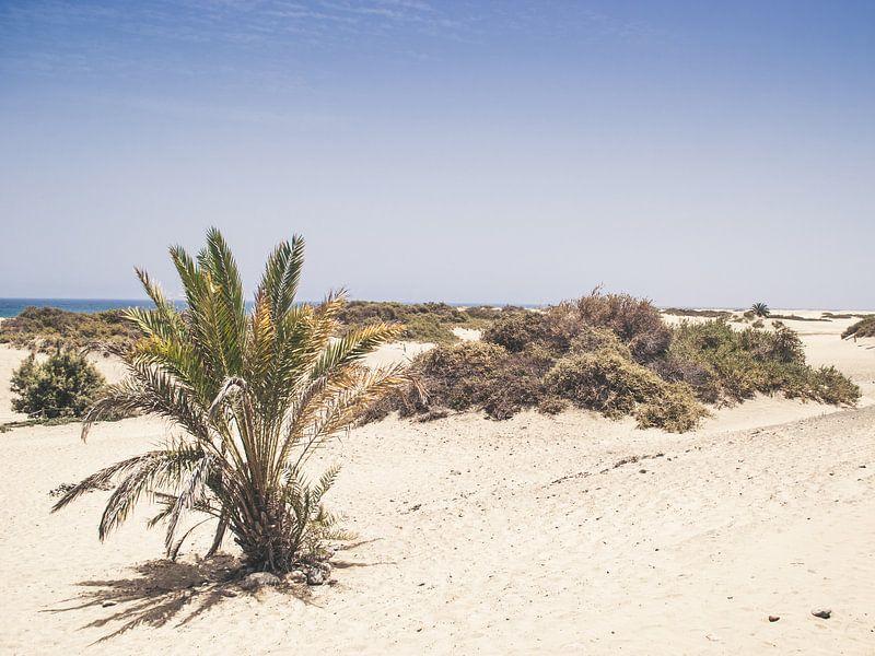 Playa van Rob van Dongen
