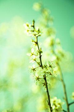 Lente bloesem von Oscar Limahelu