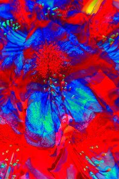 Kleurrijke rhododendronbloesem, rhododendron, abstract van Torsten Krüger