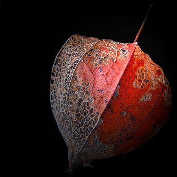 Lampionnetje von Rob van der Pijll