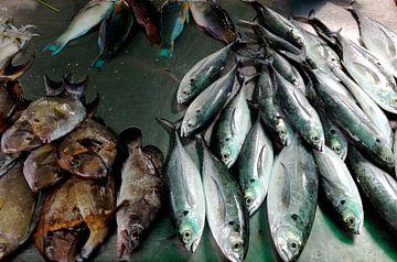 Fische Thailand van Pünktchenpünktchen Kommastrich