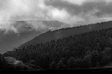 Mist in het Zwarte Woud van Ella Schnur