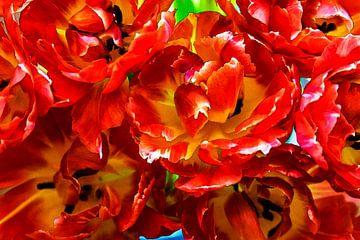 Tulpen uit Holland van 2BHAPPY4EVER.com photography & digital art