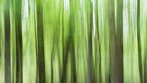 Donkere bomen in een groen bos van Kris Christiaens