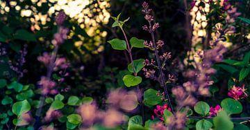 Roze bloemen van Jane Changart