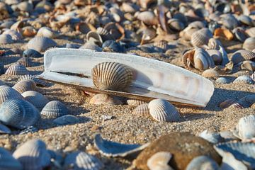 Schelpen op het strand van Ad Jekel