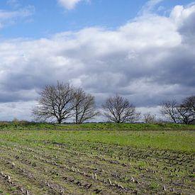 La frontière entre les Pays-Bas et l'Allemagne sur Wieland Teixeira