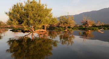 Spiegelung von Bäumen in den stillen Wassern des Kerkini-Sees, Nordgriechenland von Koolspix