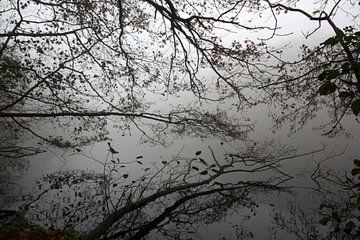 Mirror lake von Jelle Ursem