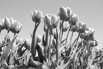 Tulpen van Ingrid Mooij