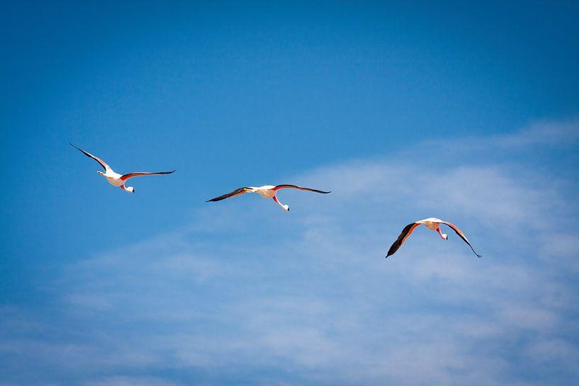 James Flamingo van Eriks Photoshop by Erik Heuver