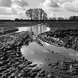 Modder in de polder van Bas Wolfs