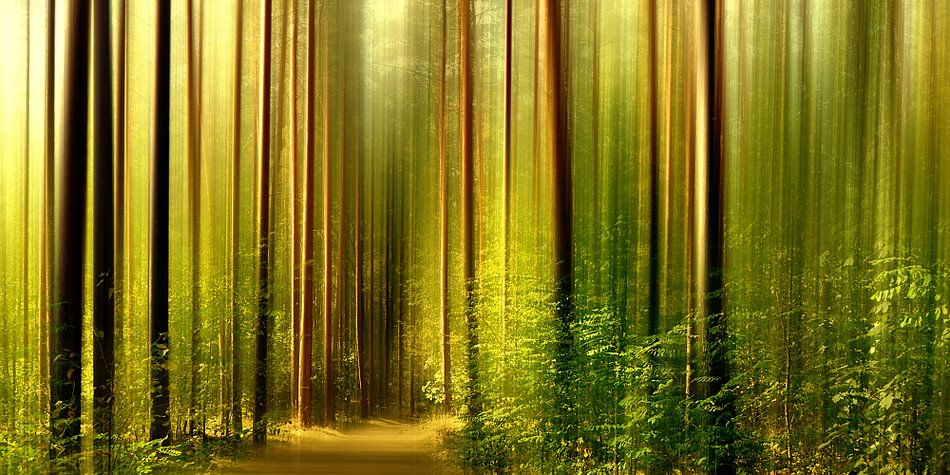 Im Wald van Violetta Honkisz