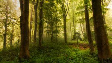 Der kleine Baum, Leif Londal von 1x