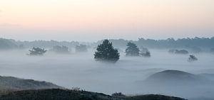 Mistig landschap van de Leuvenumse Bossen